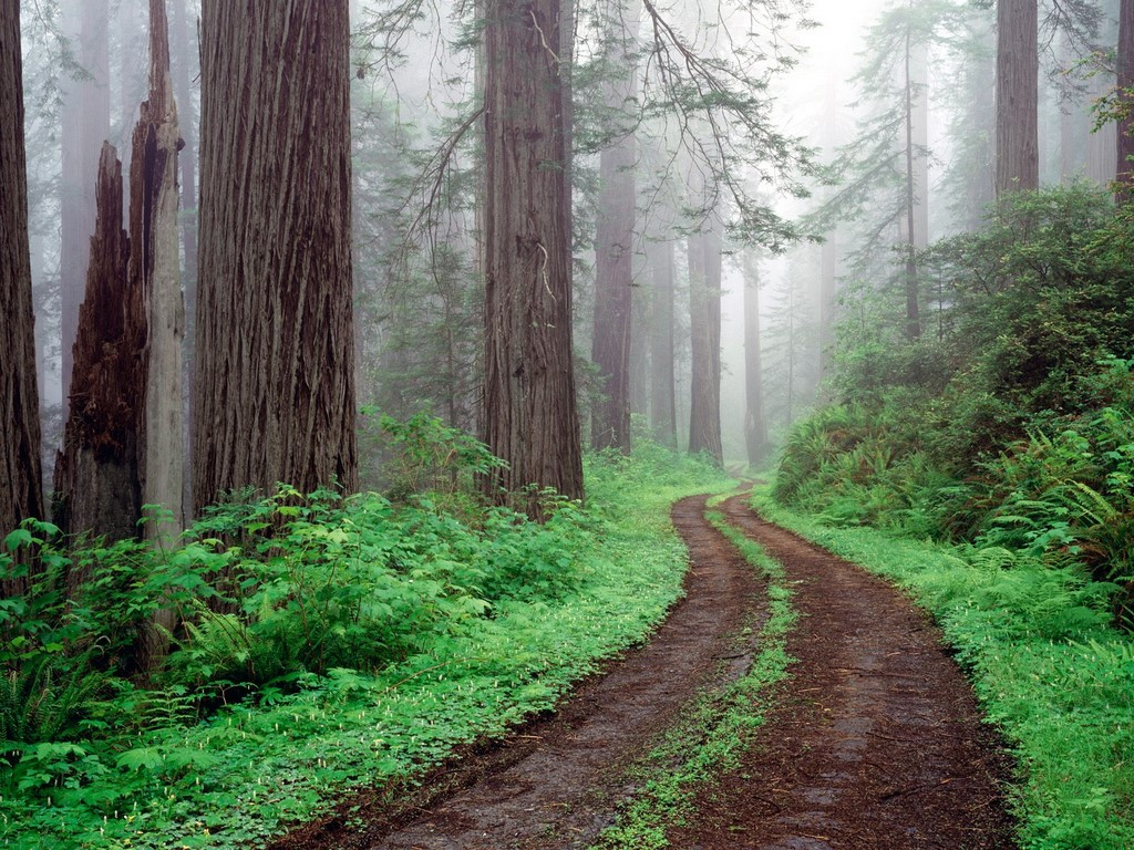 forest_road__redwood_national_park__california_us