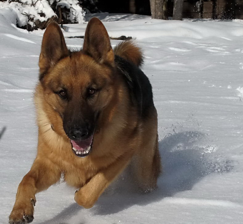 Sonny running 2a