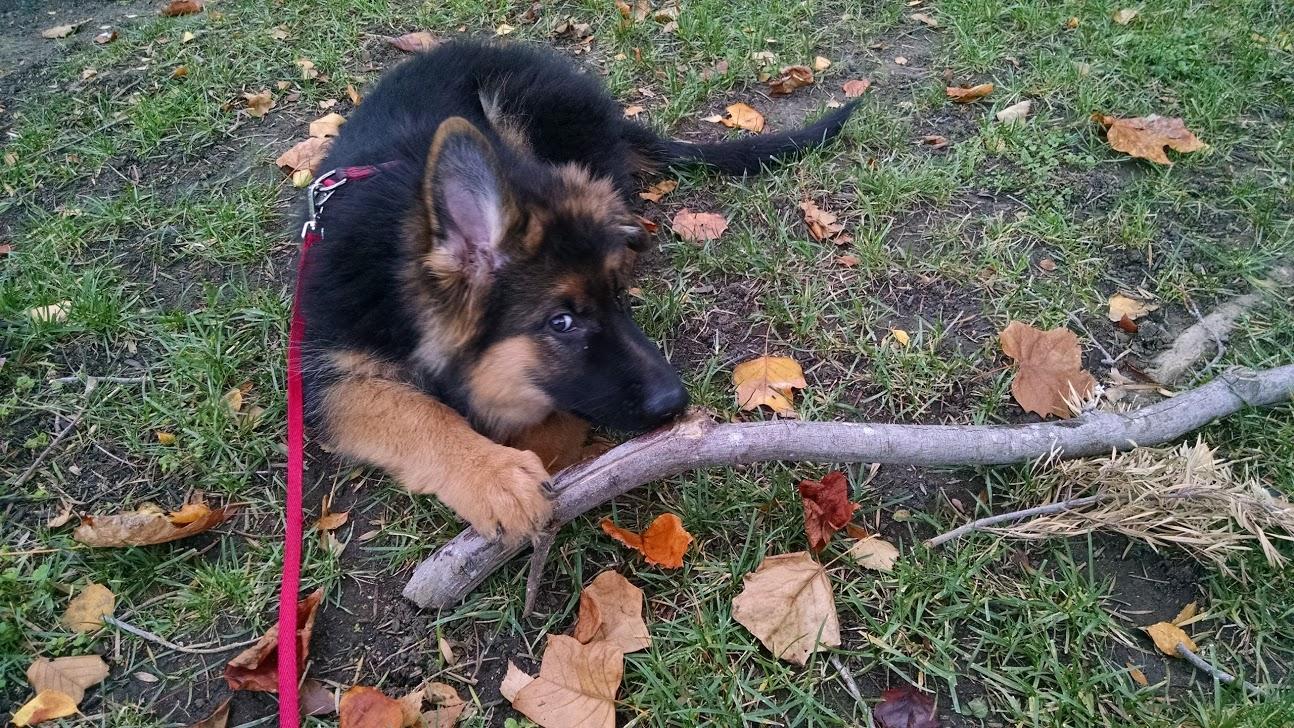 baxter twig