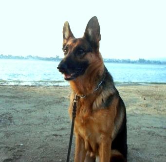 tosca beach 3